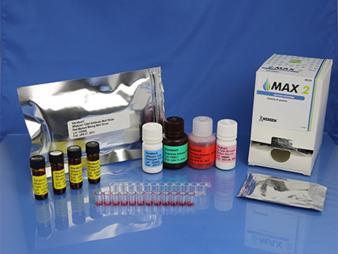 VeratoxFor Aflatoxin HS (high sensitivity) (8031)